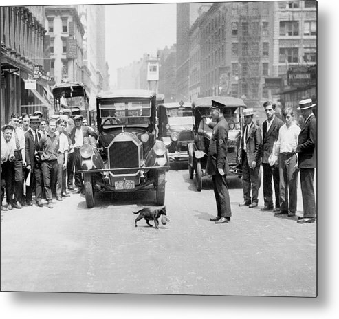 Kitten Metal Print featuring the photograph Mother Cat Blackie Halts Traffic As She by New York Daily News Archive
