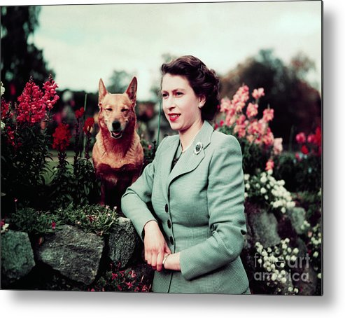 Pets Metal Print featuring the photograph Queen Elizabeth In Garden With Dog by Bettmann