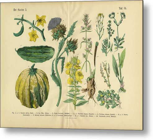 Evening Primrose Metal Print featuring the digital art Vegetables And Flowers Of The Garden by Bauhaus1000