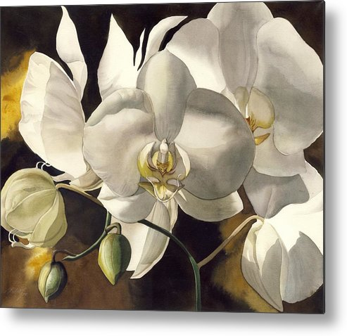 Watercolour Metal Print featuring the painting White Orchids by Alfred Ng