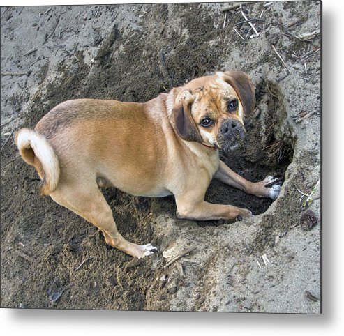 Pets Metal Print featuring the photograph Aren't you going to help? by PhotoviewPlus