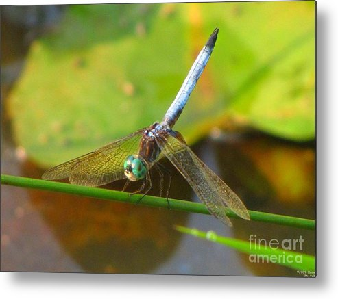 Dragonfly Metal Print featuring the photograph Dragonfly by Rrrose Pix