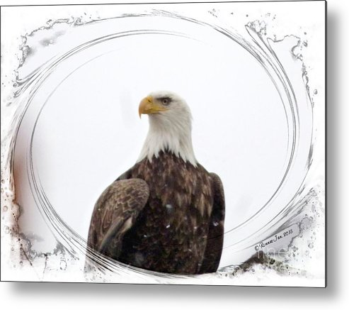 Bald Eagle Metal Print featuring the photograph Bald Eagle Adult by Rennae Christman