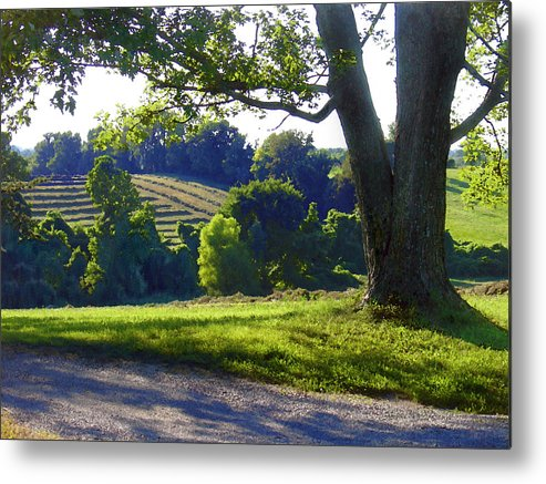Landscape Metal Print featuring the photograph Country Landscape by Steve Karol