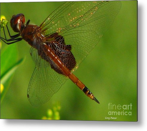 Art For The Wall...patzer Photographydragonfly Metal Print featuring the photograph Dragonfly Art 2 by Greg Patzer