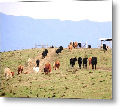 Landscape Metal Print featuring the photograph Feeding Time by Cumberland Studios