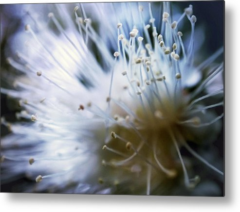 Flower Metal Print featuring the photograph Flower 0729 by Damon Clarke