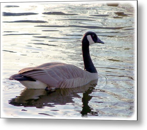 Digital Photo Metal Print featuring the photograph Goose by Sergey Bezhinets