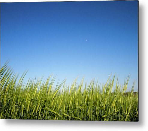 Tranquility Metal Print featuring the photograph Harvest Moon by © Peter Lourenco