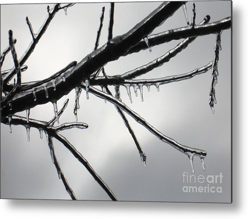 Winter Metal Print featuring the photograph Iced Tree by Ann Horn