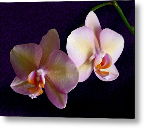 Orchid Metal Print featuring the photograph Orchid Light by Steve Karol