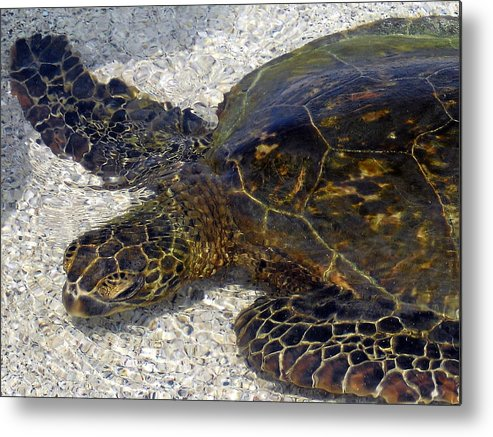 Turtle Metal Print featuring the photograph Sea Life by Athala Bruckner