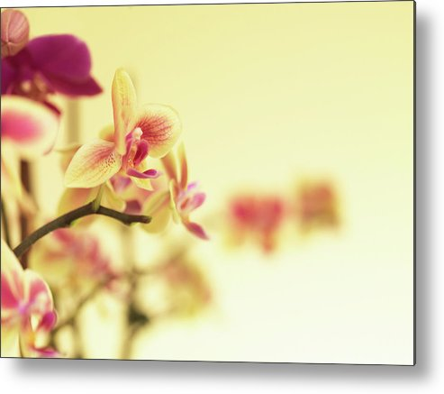 Purple Metal Print featuring the photograph Stem Of Orchids by Jlph