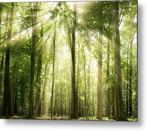 Tranquility Metal Print featuring the photograph Sunrays Through Treetops by Melissa Fague