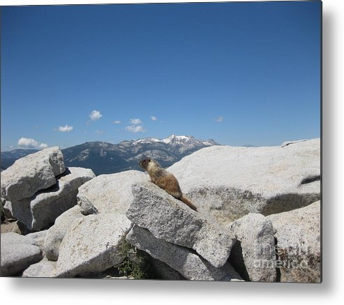 Half Dome Metal Print featuring the photograph The Resident of Half Dome by AC Hamilton