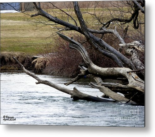 Water Metal Print featuring the photograph Waters Edge by Rennae Christman