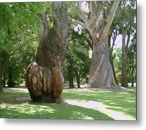 Gum Trees Metal Print featuring the photograph Gum Trees by Joyce Woodhouse