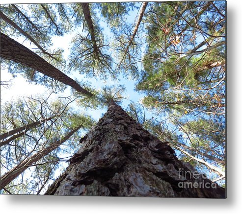 Trees Metal Print featuring the photograph Looking up by Rrrose Pix