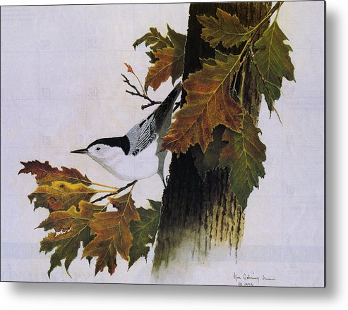 Bird Metal Print featuring the painting White-breasted Nuthatch by Bill Gehring