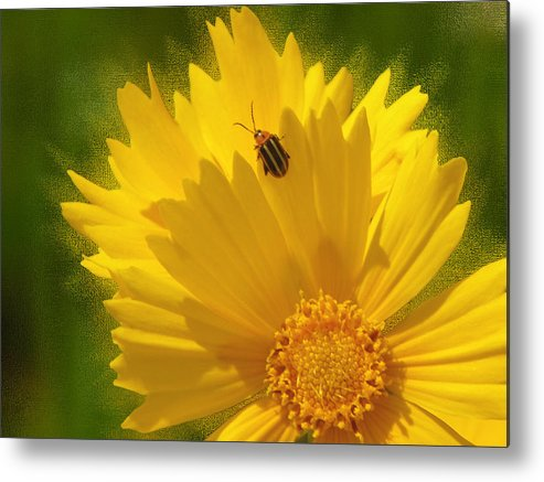 Floral Metal Print featuring the photograph Lady Bug Lookout by Paul Anderson