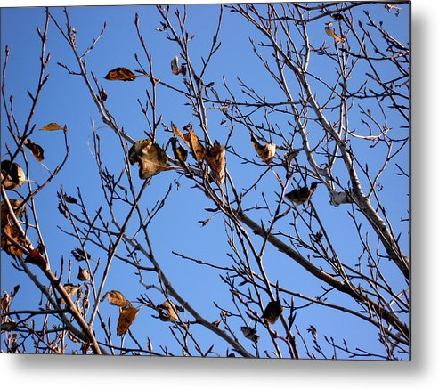 Nature Metal Print featuring the photograph Autumn Wind by Marilynne Bull