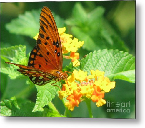 Butterfly Metal Print featuring the photograph Butterfly by Amanda Barcon