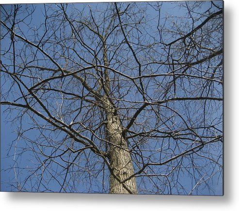 Nature Metal Print featuring the photograph A Look Up A Tree by Jennifer Sweet