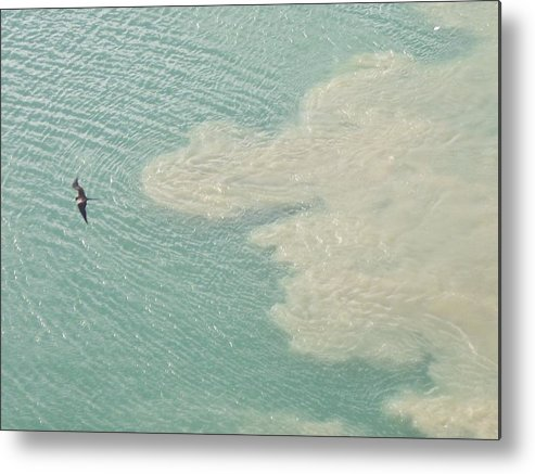 Bird Metal Print featuring the photograph Bird and Churning Sand by Michelle Miron-Rebbe