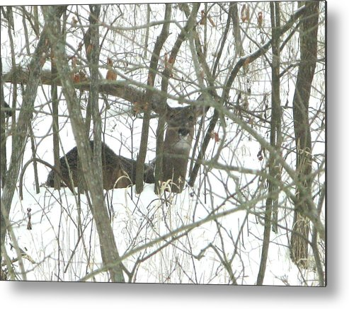 Nature Metal Print featuring the photograph Can You See Me by Martie DAndrea