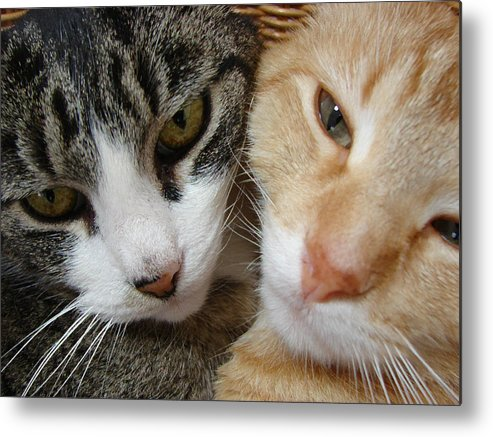 2 Cats Metal Print featuring the digital art Cat Faces by Jana Russon