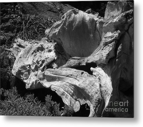 Drift Wood Metal Print featuring the photograph Drift Wood by Chad Natti