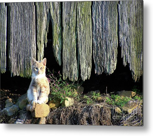 Cat Metal Print featuring the photograph Formal Portrait by Pete Hellmann
