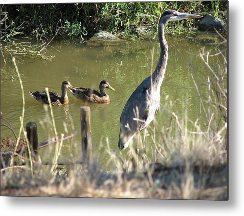 Egert Metal Print featuring the photograph Friends by Kathy Roncarati