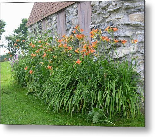 Daylily Metal Print featuring the photograph Grandmother by Peter Williams