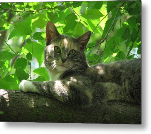 Metal Print featuring the photograph Ivy in the tree by Kathy Roncarati