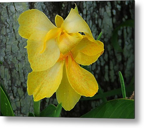 Yellow Metal Print featuring the photograph Lemon Yellow by Judy Waller