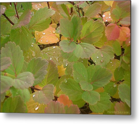 Leaves Metal Print featuring the photograph Rainy Morning by Marilynne Bull
