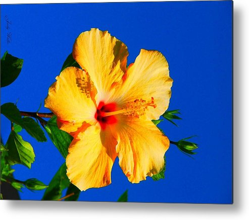 Flower Metal Print featuring the photograph Reaching For The Sky by Judy Waller