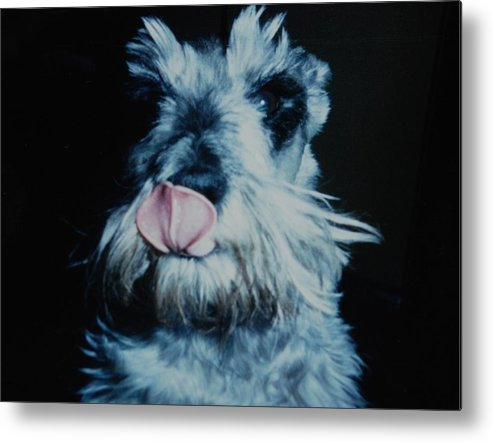 Dogs Metal Print featuring the photograph Sam The Fat Cow by Rob Hans
