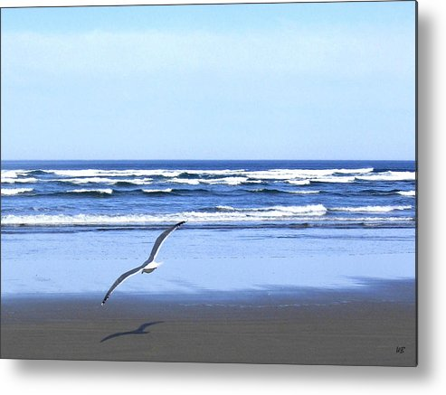 Seagull Metal Print featuring the photograph Shadow On The Sand by Will Borden