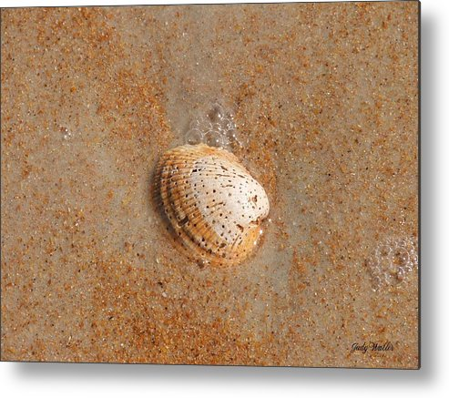 Beach Metal Print featuring the photograph Shell by Judy Waller