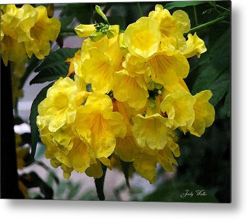 Yellow Metal Print featuring the photograph Simply Yellow by Judy Waller