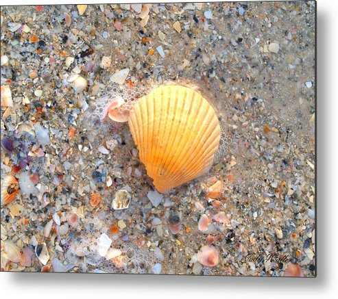 Shell Metal Print featuring the photograph Single Shell by Judy Waller