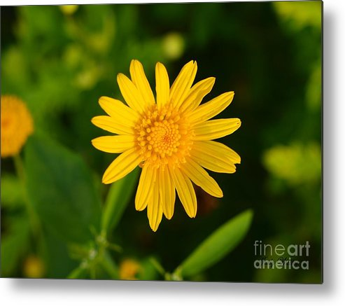 Garden Metal Print featuring the photograph Single Yellow by Judy Waller