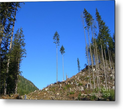 British Columbia Metal Print featuring the photograph Tall Timbers by Jim Thomson