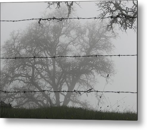 Darin Volpe Nature Metal Print featuring the photograph The Mist -- Oak Tree Behind Barbed Wire On Mt. Hamilton, California by Darin Volpe