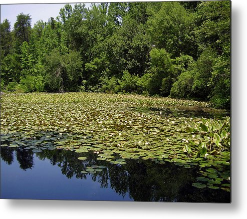 Tranquility Metal Print featuring the photograph Tranquility by Flavia Westerwelle