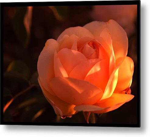Flowers Metal Print featuring the photograph Warm Sun by Richard Gordon