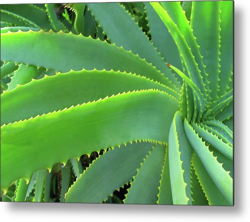 Natural Pattern Metal Print featuring the photograph Aloe Vera - Healing Plant by Lubilub