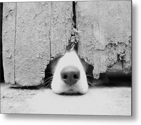 Pets Metal Print featuring the photograph Anyone Out There by By Jake P Johnson